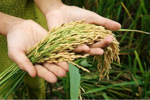 NIFA Grants for NGOs to fight for Food Insecurity (United States)