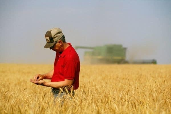 FAO-ITU: Calling Innovative Solutions advancing Transformation in Agriculture