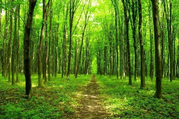 Tanzania Forest Fund offering Major and Medium Grants
